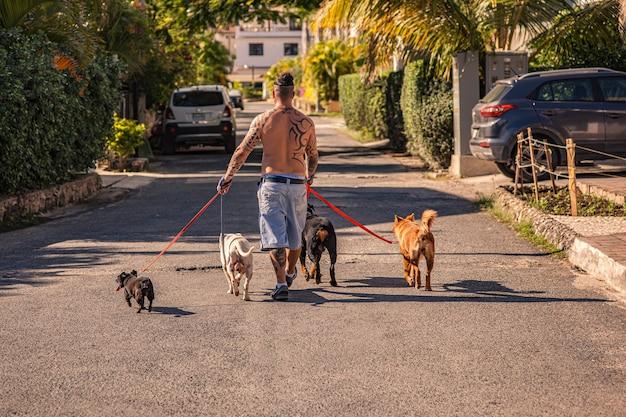 ドミニカ共和国、ドミニカ共和国2020年2月6日:入れ墨のある男が犬を散歩させる
