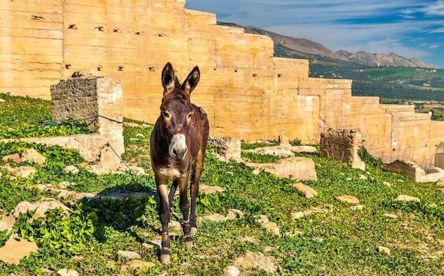 フェズの城壁にいるドンキー-モロッコ