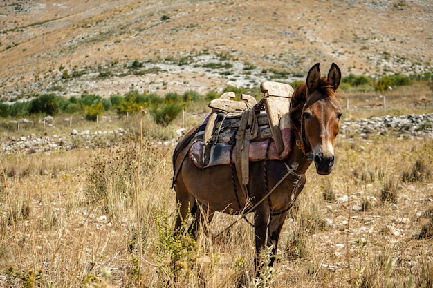 A donkey in a cart grazes on the mountain slopes and waits for the owner