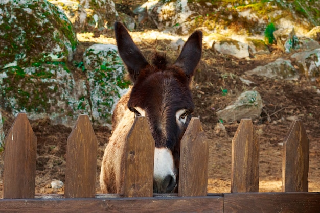 Donkey in corral