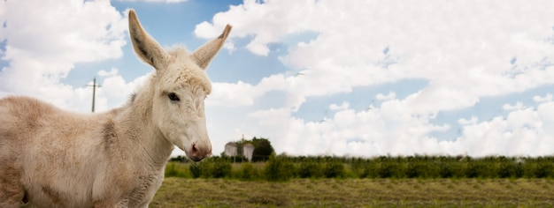 Donkey countryside banner, banner image with copy space