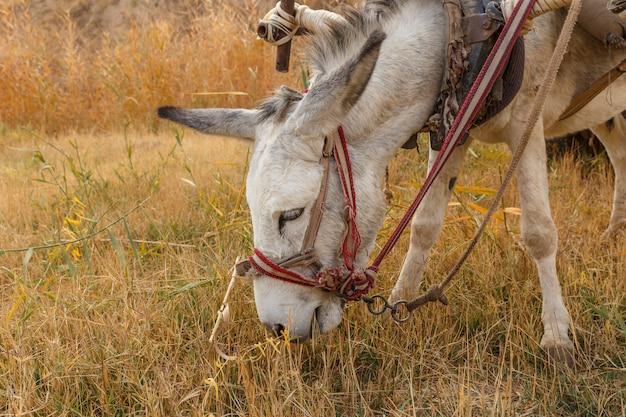 Donkey eats dry grass in the pasture, donkey head