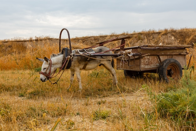 Donkey harnessed to an iron cart stands in a meadow