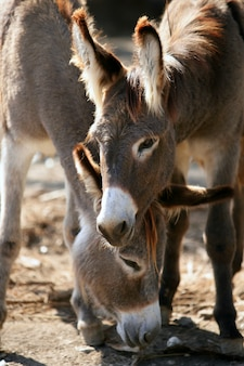 Donkey and her young