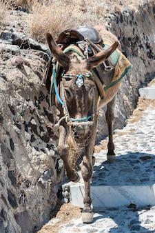 Donkey on stairs of santorini