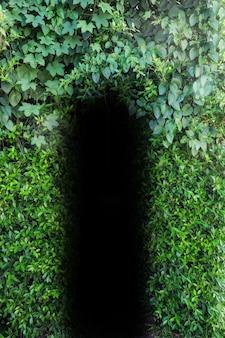 ドア天然葉の穴