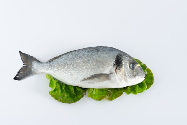 Dorada fresh fish on lettuce leaves on white background. top view.