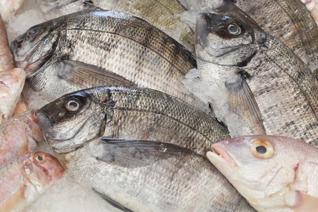 市場のドラド魚