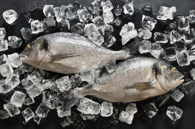 블랙에 아이스 큐브를 가진 도라도 물고기