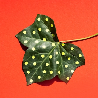 Dotted leaf minimal nature still life concept