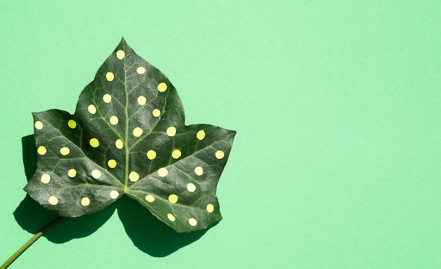 Dotty leaf minimal nature still life concept on copy space background