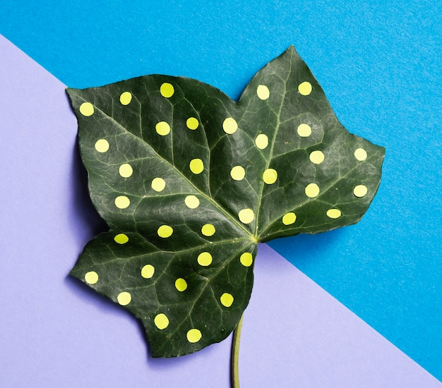 Dotty leaf minimal nature still life concept