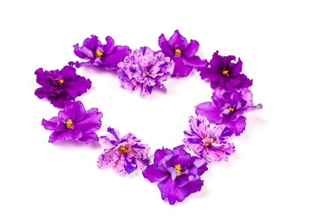 Double purple saintpaulia flowers are laid out in the shape of a heart on a white background. love concept
