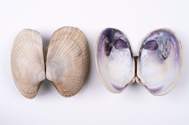 Double sea shells front and back isolated on white background, lungs concept. top view with texture