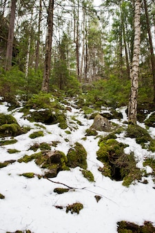 カルパティア山脈の雪の森のdovbush岩。