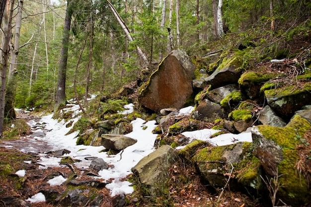 Dovbush скалы в зеленом лесу в карпатах.