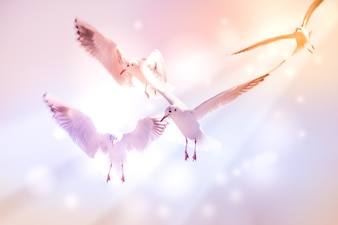Dove fly in the air with wings wide over blue sky