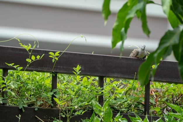 鳩は木と葉が周りにある茶色の鋼鉄柵にぶら下がっています。