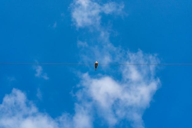 鳩は澄んだ空の中で一人で電気の単一ケーブルラインに固執します。