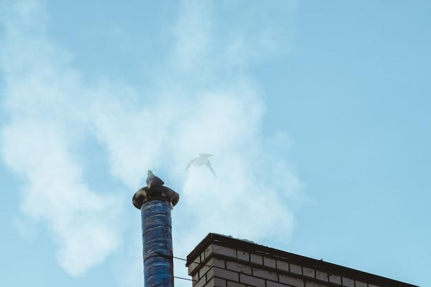 Голубь на дымоходе выше яркое синее небо в облаке пара или дыма с копией пространства. маленький голубь взмахнул крыльями. ясное небо над крышей с силуэтом двух птиц.