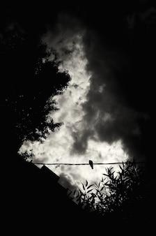 비둘기는 극적인 하늘을 배경으로 철사 위에 앉아 있다
