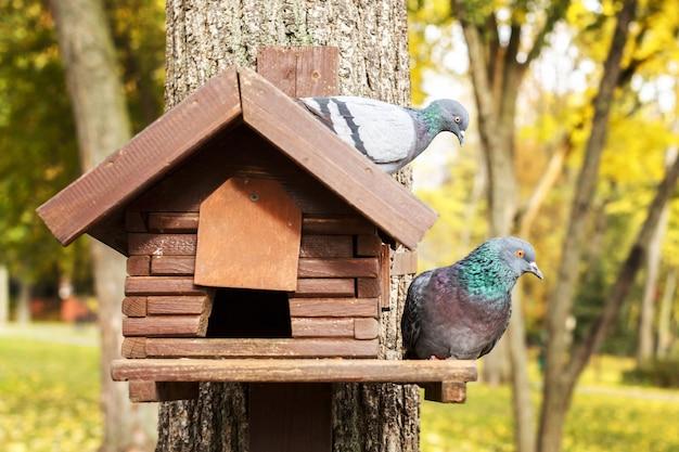 Doves in an autumn park sit on a birdhouse