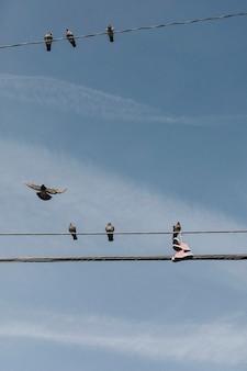ピンクの靴で電力線を共有している鳩