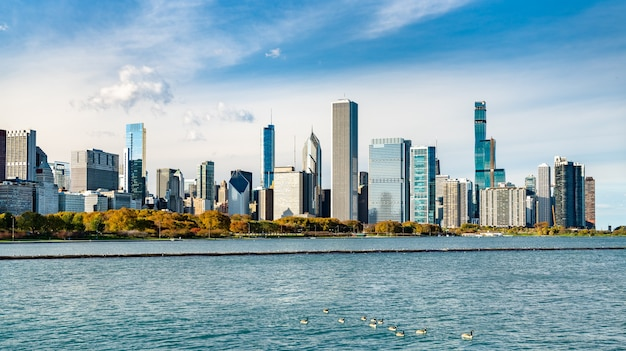 Downtown chicago skyline with geese in lake michigan. united states