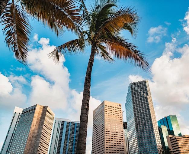 Майами флорида палмс билдинг