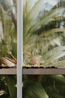 温室内のドラセナフラグラン