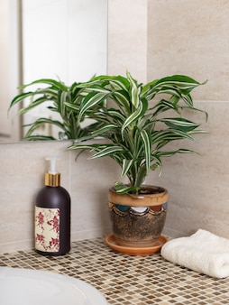 Dracaena indoor plant in a flowerpot, liquid soap pump and clean towel on the counter in the bathroom. plant and interior concept. selective focus.