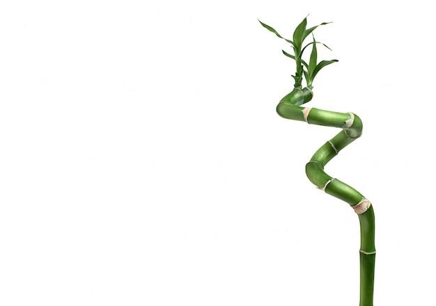 ドラセナの茎幸せな竹の葉は、白い背景で隔離