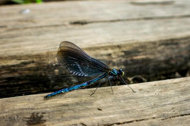 Dragon fly in plitvice, croatia.