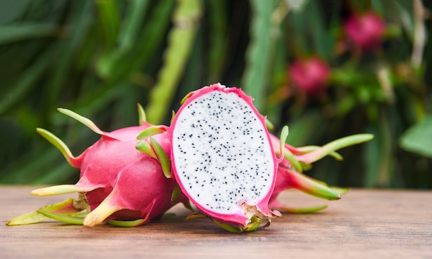 Dragon fruit slice on wooden with dragon fruit tree fresh pitaya summer tropical fruit
