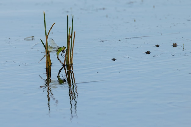 池のトンボとカエル。