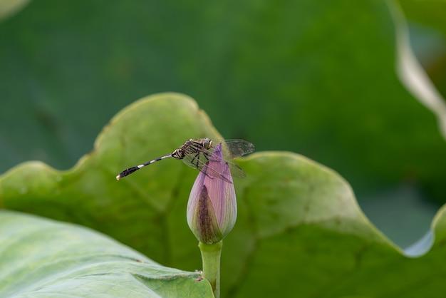 녹색 연꽃 잎에 잠자리