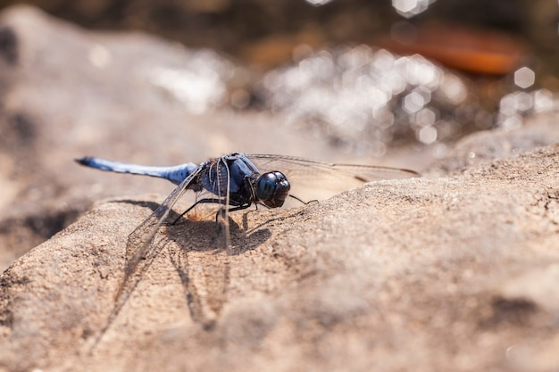 Dragonflies with  background bokeh