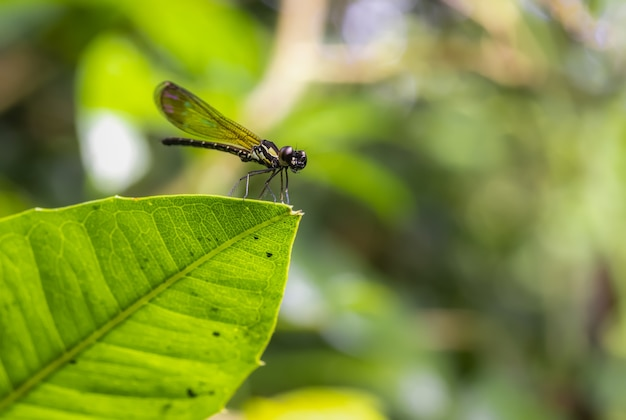 Dragonfly in the blurred