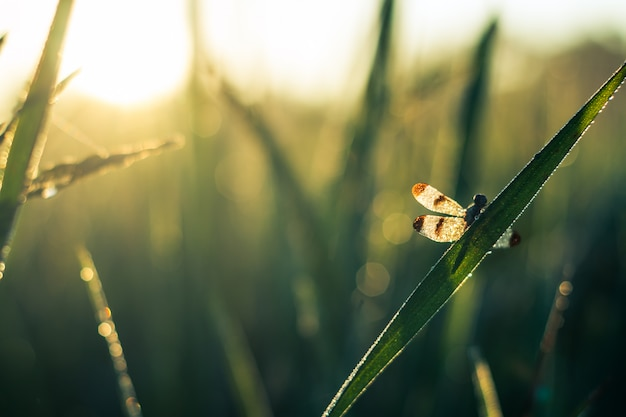 トンボは朝の緑の葉につかまえます。