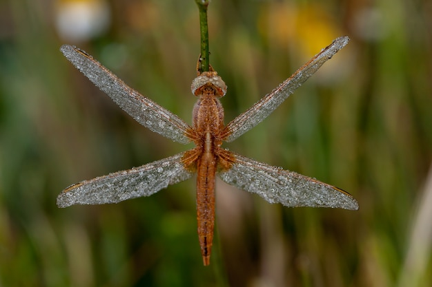 Dragonfly close up in the nature
