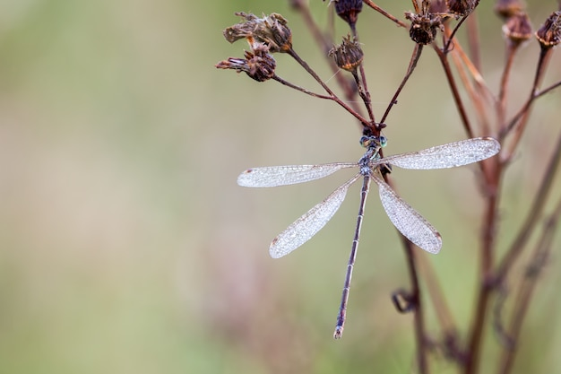 Dragonfly in close up