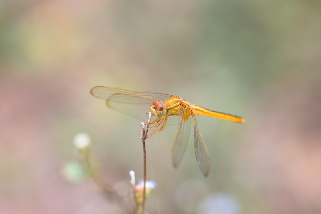 Dragonfly on the grass flower in nature background.