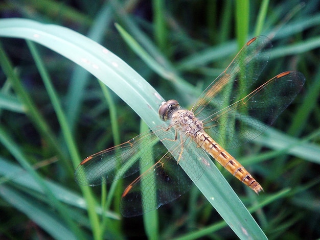 A dragonfly on the green grass