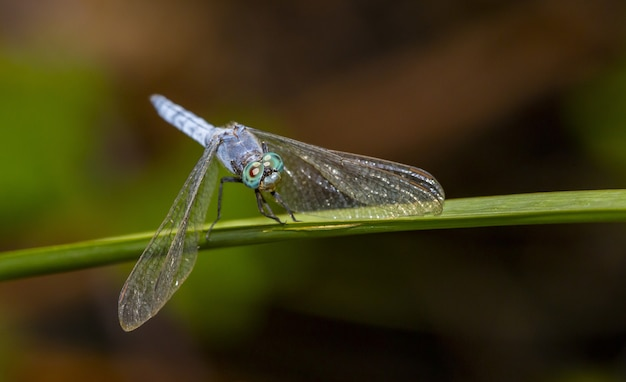 Dragonfly on green leaf close up
