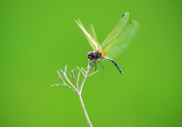 Dragonfly in green nature background
