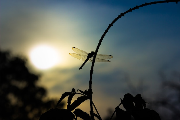 Dragonfly perched on a stalk on a beautiful natures background