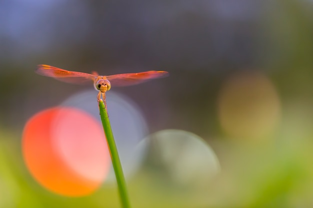 Dragonfly perched on a tree with bokeh