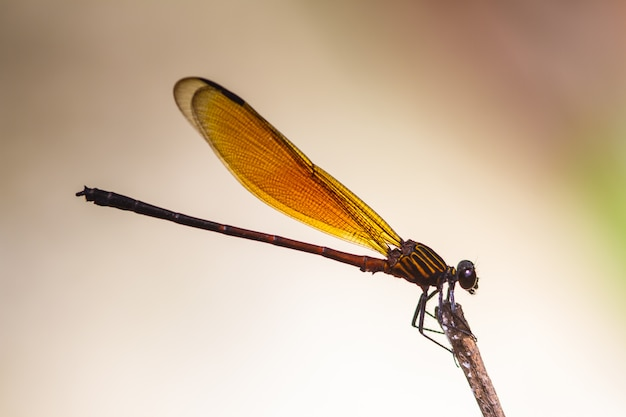 Dragonfly resting on a branch in forest