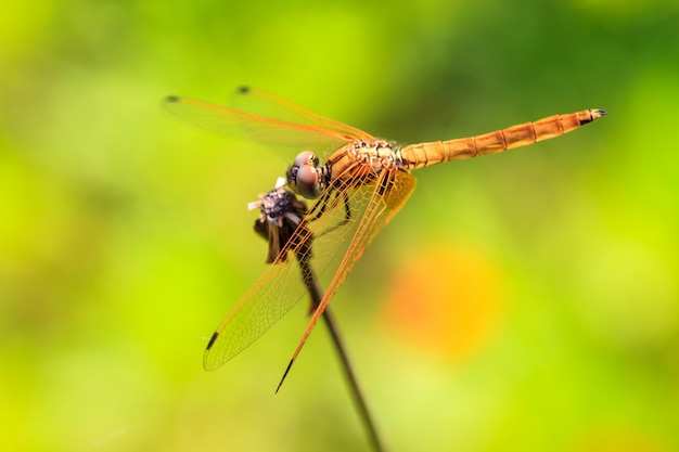 Dragonfly resting on a branch