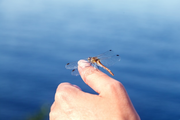 Dragonfly resting, sitting on a woman hand